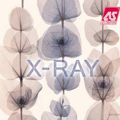 X-Ray tapéta, poszter katalógus