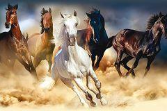 WB8202 cikkszámú tapéta.állatok,fotórealisztikus,különleges felületű,különleges motívumos,barna,bézs-drapp,fehér,fekete,kék,szürke, bordűr