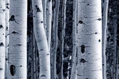 WB8207 cikkszámú tapéta.Fa hatású-fa mintás,különleges felületű,különleges motívumos,természeti mintás,fehér,fekete,kék,szürke, bordűr
