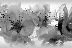 WB8208 cikkszámú tapéta.Különleges felületű,természeti mintás,virágmintás,fehér,fekete, bordűr