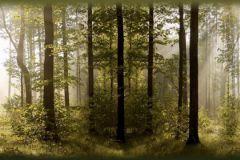 WB8214 cikkszámú tapéta.Fotórealisztikus,különleges felületű,különleges motívumos,tájkép,természeti mintás,barna,zöld, bordűr