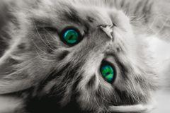 WB8217 cikkszámú tapéta.Különleges motívumos,állatok,gyerek,különleges felületű,különleges motívumos,fehér,szürke,zöld, bordűr