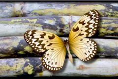 WB8238 cikkszámú tapéta.állatok,fa hatású-fa mintás,különleges felületű,természeti mintás,barna,kék,sárga,szürke,zöld, bordűr