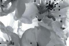 FT V 0221 cikkszámú tapéta.Papír  tapéta