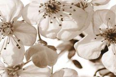 FTN H 2706 cikkszámú tapéta.Virágmintás,bézs-drapp,fehér,vlies poszter, fotótapéta