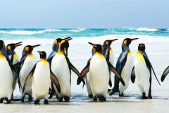 FTN H 2716 cikkszámú tapéta.állatok,fehér,fekete,kék,sárga,vlies poszter, fotótapéta