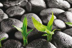 FTN H 2719 cikkszámú tapéta.Természeti mintás,fekete,szürke,zöld,vlies poszter, fotótapéta