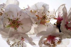 FTN H 2742 cikkszámú tapéta.Virágmintás,fehér,pink-rózsaszín,sárga,vlies poszter, fotótapéta