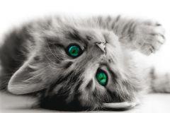 FTN M 2605 cikkszámú tapéta.állatok,fehér,fekete,szürke,türkiz,vlies poszter, fotótapéta