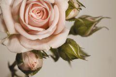 FTN M 2620 cikkszámú tapéta.Virágmintás,pink-rózsaszín,szürke,zöld,vlies poszter, fotótapéta