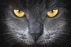 FTN M 2640 cikkszámú tapéta.állatok,fekete,sárga,szürke,vlies poszter, fotótapéta