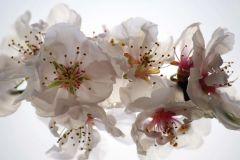 FTN M 2654 cikkszámú tapéta.Virágmintás,fehér,pink-rózsaszín,zöld,vlies poszter, fotótapéta
