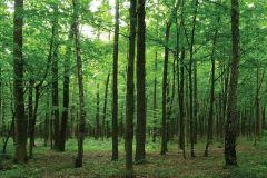 FTN M 2656 cikkszámú tapéta.Fa hatású-fa mintás,tájkép,természeti mintás,barna,zöld,vlies poszter, fotótapéta