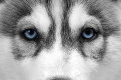 FTN M 2668 cikkszámú tapéta.állatok,fehér,fekete,kék,szürke,vlies poszter, fotótapéta