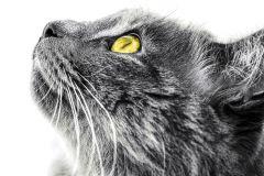 FTN M 2670 cikkszámú tapéta.állatok,fehér,fekete,sárga,szürke,vlies poszter, fotótapéta