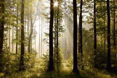 FTN S 2447 cikkszámú tapéta.Fa hatású-fa mintás,tájkép,természeti mintás,barna,fehér,zöld,vlies poszter, fotótapéta