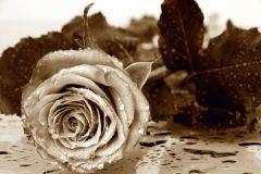 FTN S 2458 cikkszámú tapéta.Virágmintás,barna,bézs-drapp,vlies poszter, fotótapéta
