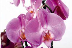 FTN S 2459 cikkszámú tapéta.Virágmintás,fehér,pink-rózsaszín,zöld,vlies poszter, fotótapéta