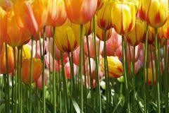 FTN S 2462 cikkszámú tapéta.Virágmintás,piros-bordó,sárga,zöld,vlies poszter, fotótapéta