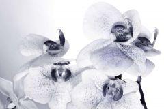 FTN S 2464 cikkszámú tapéta.Virágmintás,fehér,fekete,vlies poszter, fotótapéta