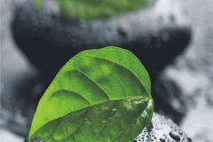 FTN V 2803 cikkszámú tapéta.Természeti mintás,fekete,szürke,zöld,vlies poszter, fotótapéta