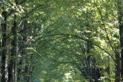 FTN V 2807 cikkszámú tapéta.Tájkép,barna,zöld,vlies poszter, fotótapéta