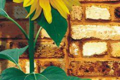 FTN V 2841 cikkszámú tapéta.Kőhatású-kőmintás,virágmintás,barna,bézs-drapp,sárga,zöld,vlies poszter, fotótapéta