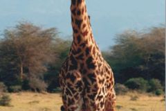 FTN V 2846 cikkszámú tapéta.állatok,barna,bézs-drapp,kék,zöld,vlies poszter, fotótapéta