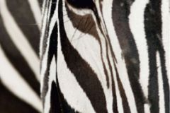 FTN V 2853 cikkszámú tapéta.állatok,fehér,fekete,vlies poszter, fotótapéta