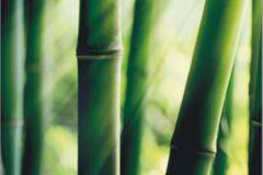 FTN V 2856 cikkszámú tapéta.Természeti mintás,virágmintás,zöld,vlies poszter, fotótapéta