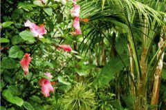 FTN V 2864 cikkszámú tapéta.Természeti mintás,barna,pink-rózsaszín,zöld,vlies poszter, fotótapéta