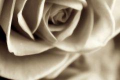 FTN V 2894 cikkszámú tapéta.Virágmintás,bézs-drapp,fehér,vlies poszter, fotótapéta