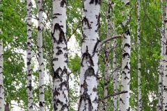 FTN V 2896 cikkszámú tapéta.Természeti mintás,fehér,fekete,zöld,vlies poszter, fotótapéta