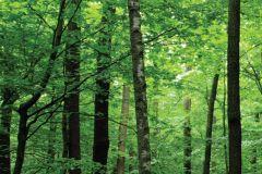 FTN V 2920 cikkszámú tapéta.Természeti mintás,barna,zöld,vlies poszter, fotótapéta