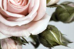 FTN XL 2506 cikkszámú tapéta.Virágmintás,pink-rózsaszín,szürke,zöld,vlies poszter, fotótapéta