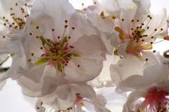 FTN XL 2508 cikkszámú tapéta.Virágmintás,fehér,pink-rózsaszín,zöld,vlies poszter, fotótapéta