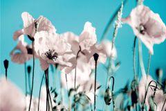 FTN XXL 0118 cikkszámú tapéta.Virágmintás,fehér,kék,vlies poszter, fotótapéta