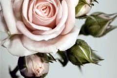 FTN XXL 0313 cikkszámú tapéta.Virágmintás,pink-rózsaszín,szürke,zöld,vlies poszter, fotótapéta