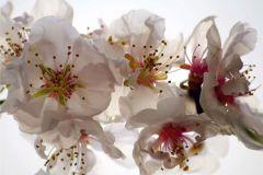 FTN XXL 0385 cikkszámú tapéta.Virágmintás,fehér,pink-rózsaszín,sárga,vlies poszter, fotótapéta