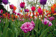 FTN XXL 0425 cikkszámú tapéta.Természeti mintás,virágmintás,fehér,pink-rózsaszín,piros-bordó,zöld,vlies poszter, fotótapéta