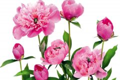 FTN XXL 0448 cikkszámú tapéta.állatok,virágmintás,fehér,pink-rózsaszín,zöld,vlies poszter, fotótapéta