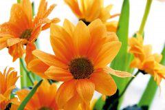 FTN XXL 0450 cikkszámú tapéta.Virágmintás,fehér,narancs-terrakotta,zöld,vlies poszter, fotótapéta