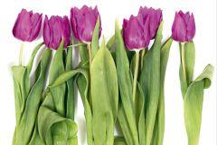 FTS 0065 cikkszámú tapéta.Természeti mintás,virágmintás,fehér,lila,pink-rózsaszín,zöld,papír poszter, fotótapéta