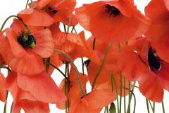 FTS 0479 cikkszámú tapéta.Természeti mintás,virágmintás,fehér,piros-bordó,zöld,papír poszter, fotótapéta