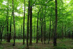 FTS 1324 cikkszámú tapéta.3d hatású,fotórealisztikus,tájkép,természeti mintás,barna,zöld,papír poszter, fotótapéta