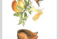 6279 cikkszámú tapéta.állatok,gyerek,különleges motívumos,rajzolt,retro,barna,narancs-terrakotta,piros-bordó,sárga,zöld,lemosható,vlies bordűr
