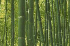 51124704 cikkszámú tapéta.Fotórealisztikus,különleges felületű,természeti mintás,zöld,gyengén mosható,papír tapéta