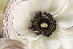 2-1884 cikkszámú tapéta.Virágmintás,fehér,fekete,lila,zöld,gyengén mosható,papír poszter, fotótapéta