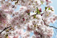 8-507 cikkszámú tapéta.Természeti mintás,virágmintás,fehér,kék,pink-rózsaszín,zöld,gyengén mosható,papír poszter, fotótapéta