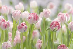 8-708 cikkszámú tapéta.Tájkép,természeti mintás,virágmintás,fehér,pink-rózsaszín,zöld,gyengén mosható,papír poszter, fotótapéta